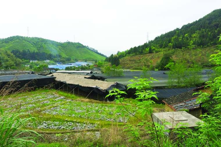 Pilzfarm im Chinesischen Hochland